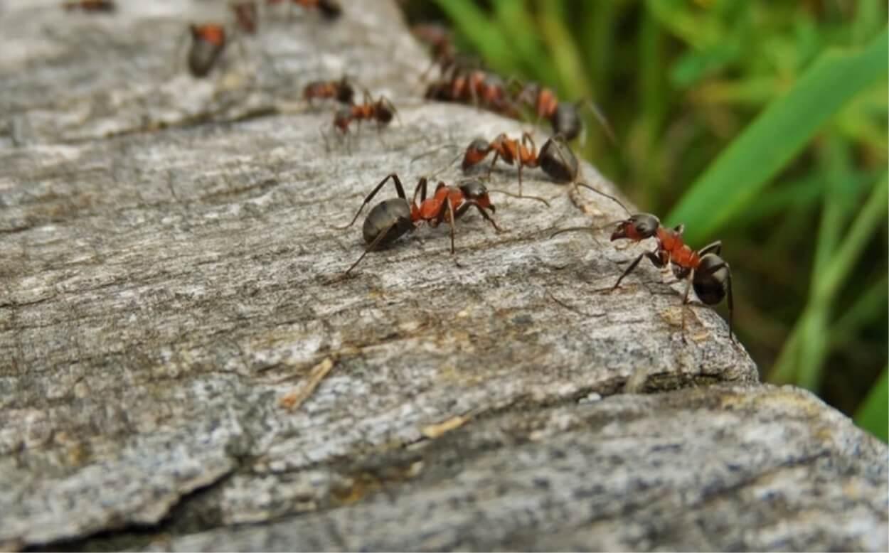 Prodotti Efficaci Contro Le Formiche ecco come allontanare subito le formiche utilizzando