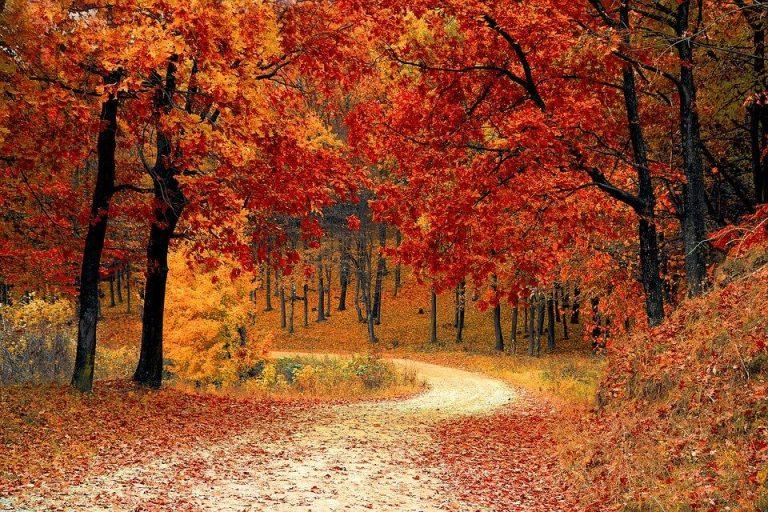 METEO NOVEMBRE 2020: vediamo la tendenza per l'ultimo mese dell'autunno in ITALIA