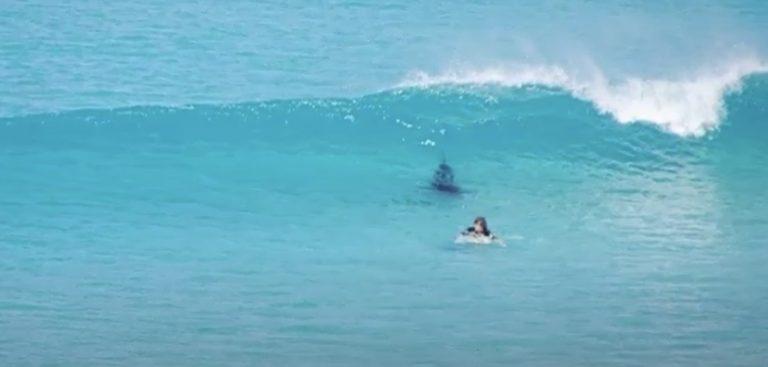 Surfista a tu per tu con un enorme squalo in acqua: il video di cosa è successo