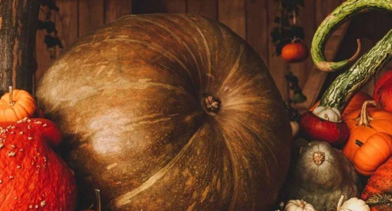 Halloween 2020, sarà una festa diversa dal solito: ecco cosa si può fare e le multe previste
