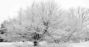 METEO TORINO - Neve in vista anche in CITTA' per le festività di NATALE, ecco quando